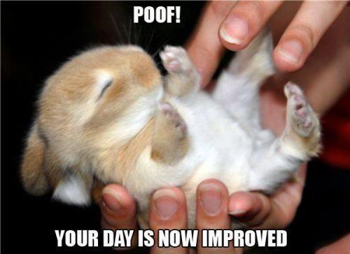 Poof Happy